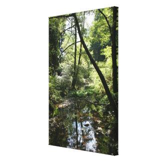 """""""Paz verde"""", maderas de Muir Impresión En Lienzo Estirada"""