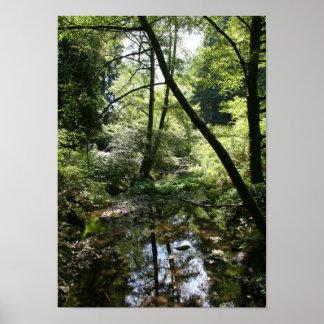 """""""Paz verde"""", maderas de Muir Impresiones"""