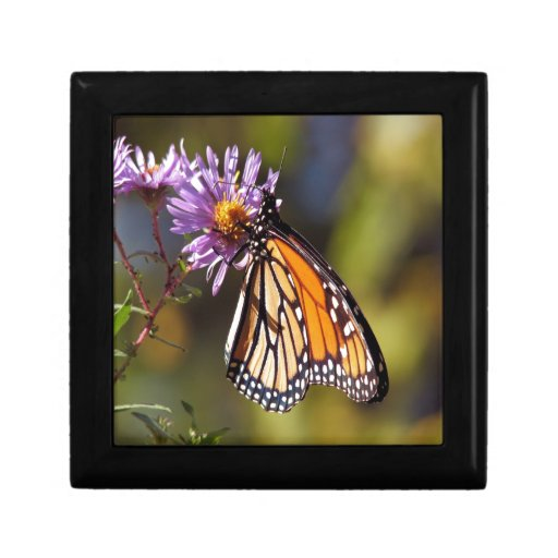 paz y alegría de la belleza de la mariposa de mona cajas de joyas