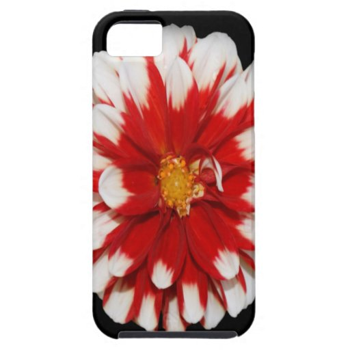 Paz y alegría de la flor del navidad funda para iPhone 5 tough