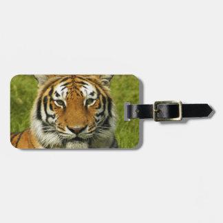 Paz y calma del tigre de la India Etiquetas Para Maletas