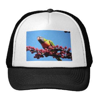 PB020254 TRUCKER HAT