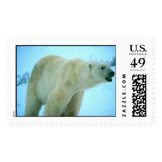 pb11[1] postage