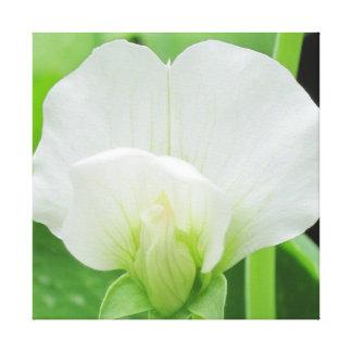 Pea Blossom Original Botanical art Wrapped Canvas