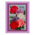 Pea Plant Vintage Seed Packet Art Post Cards