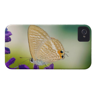 Peablue Lampides Boeticus Moth Butterfly iPhone 4 Cover