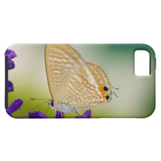 Peablue Lampides Boeticus Moth Butterfly iPhone SE/5/5s Case