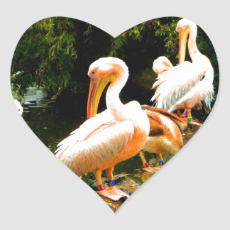Peace and joy pelicans waterfowl birds coulter heart sticker