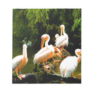 Peace and joy pelicans waterfowl birds coulter notepad