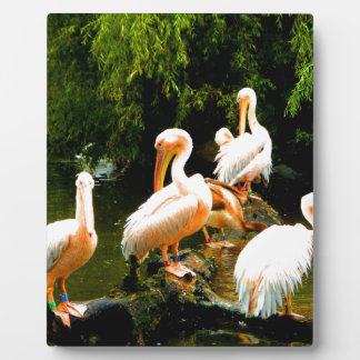 Peace and joy pelicans waterfowl birds coulter display plaques