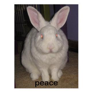 peace bunny postcards