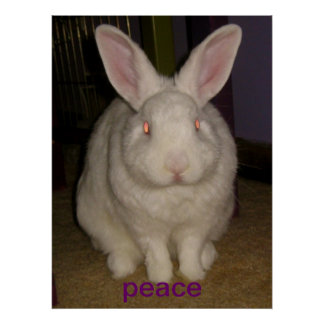 peace bunny poster