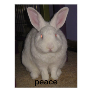 peace bunny print