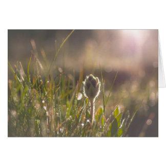 peace flower card