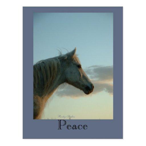 Peace Horse Postcard