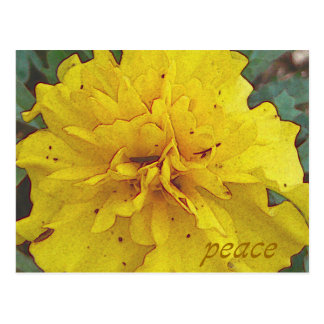 Peace in Yellow Postcard