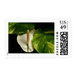 Peace Lily Postage Stamp