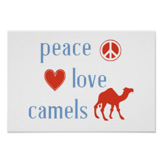 Peace Love Camels Poster