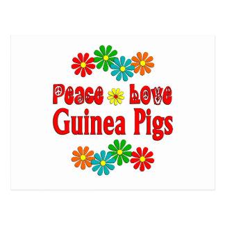 Peace Love Guinea Pigs Postcard