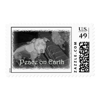 Peace on Earth pit bull stamp