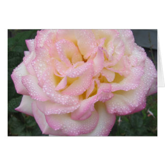 Peace Rose, after the rain. Card