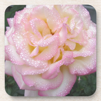 Peace Rose, after the rain. Drink Coasters