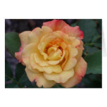 Peace Rose Beautiful Pink and Yellow Floral Card