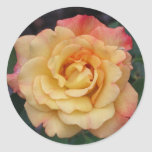 Peace Rose Beautiful Pink and Yellow Floral Classic Round Sticker