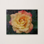 Peace Rose Beautiful Pink and Yellow Floral Jigsaw Puzzle
