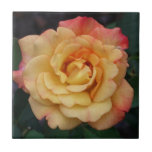 Peace Rose Beautiful Pink and Yellow Floral Tile