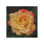 Peace Rose Beautiful Pink and Yellow Floral Wood Wall Art