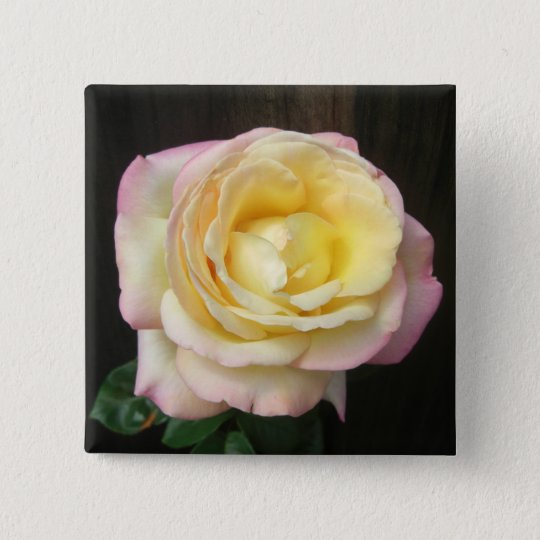 Peace Rose Buttons