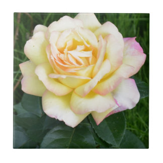 Peace rose ceramic tile