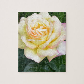Peace rose puzzles
