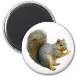 Peace Squirrel Magnet