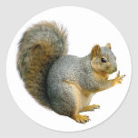 Peace Squirrel Stickers