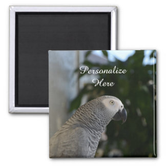 Peaceful African Grey 2 Inch Square Magnet