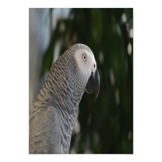Peaceful African Grey Magnetic Card