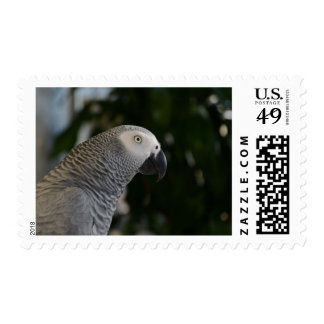 Peaceful African Grey Postage
