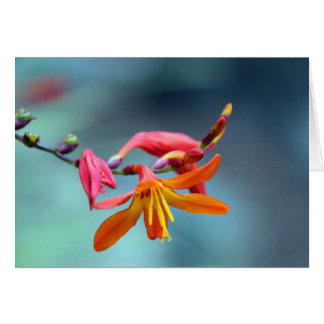 Peaceful Blossom Greeting Cards
