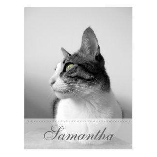 Peaceful Cat Postcard