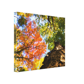 Peaceful Day In The Forest Canvas Print