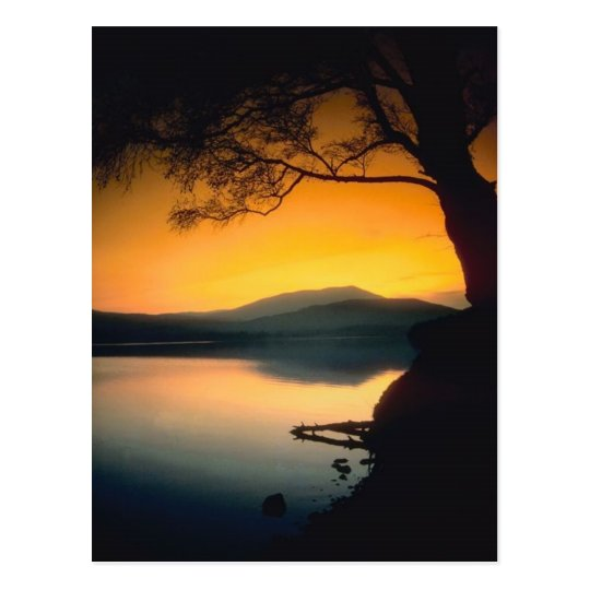 Peaceful Lake Sunset Postcard
