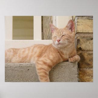 Peaceful Orange Cat on Porch Poster