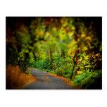 Peaceful Pathway Postcard