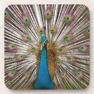 Peaceful Peacock Coaster