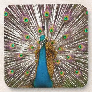 Peaceful Peacock Drink Coaster