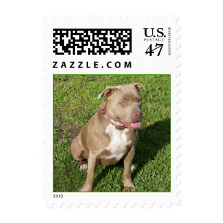Peaceful Pit Bull Stamp