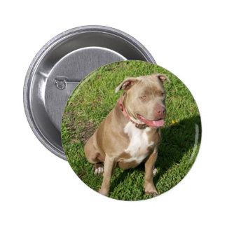 Peaceful Pitbull Pinback Button