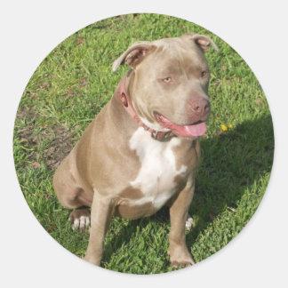Peaceful Pitbull Classic Round Sticker